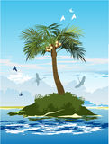 Palm tree on the island. Palm tree with coconuts on the island in the middle of the ocean Royalty Free Stock Photos