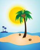 Palm Tree Island Sunny Day. Coconuts and a Palm Tree island on a sunny day Royalty Free Stock Photos