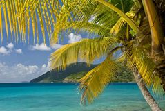Palm Tree Islands Stock Image