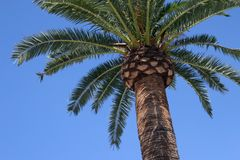 Palm tree isolated royalty free stock photo