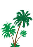 Palm tree isolated Royalty Free Stock Photography
