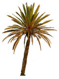 Palm tree isolated Stock Photos