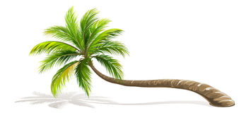 Palm Tree isolated. Vector vector illustration