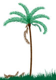 Palm tree isolated-vector Royalty Free Stock Images