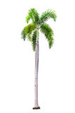Palm tree isolated on white background with clipping path Royalty Free Stock Photo