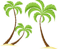 Palm tree isolated on white background - vector Royalty Free Stock Photo