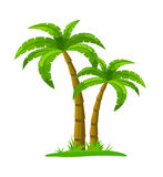 Palm Tree - Isolated on White Royalty Free Stock Photos