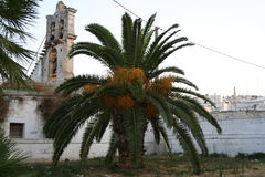 Palm tree in italy Stock Images
