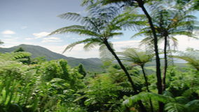 Palm tree on a jungle. A wide shot of a jungle panning to the right and showing a palm tree stock footage
