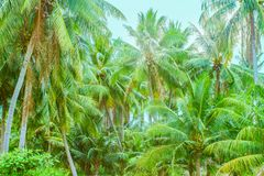 Palm tree jungle stock images