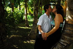 Palm Tree Kiss Stock Image