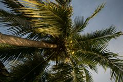Palm Tree at Koh Phangan royalty free stock images