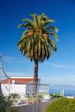 Palm tree in La Orotava, Tenerife, Spain Stock Photography