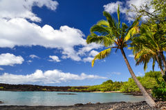 Palm tree at La Perouse Bay - Makena, Maui, Hawaii Stock Images