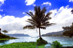 Palm Tree and Lake. Stock Images