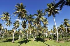 Palm tree land Royalty Free Stock Photos
