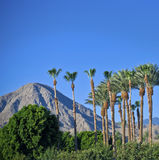 Palm Tree Landscape stock photos