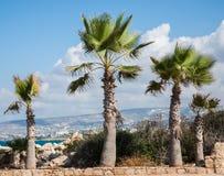 Palm tree landscape Stock Photography