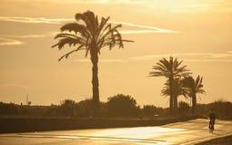 Palm tree landscape stock images