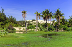 Palm Tree Landscape. Royalty Free Stock Images
