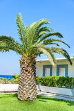 Palm tree landscape Royalty Free Stock Images