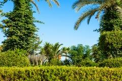 Palm tree landscape Stock Image