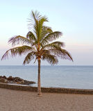 Palm tree on Lanzarote coast Stock Photos
