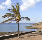 Palm tree with Lanzarote coastline Stock Images
