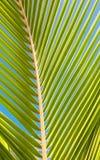 Palm tree leaf stock image