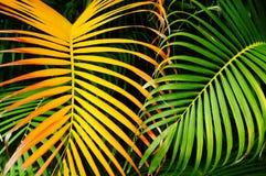 Palm tree leaf Stock Photos