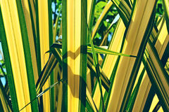 Palm Tree Leaf. Against the sky stock images