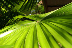 Palm Tree Leaf Stock Photos