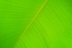 Palm tree leaf. Green palm tree leaf background in sun light Stock Image