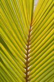 Palm tree leaf Stock Images