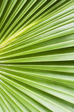 Palm tree leaf abstract background Stock Photos