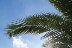 Palm tree leaf against blue sky Royalty Free Stock Photos