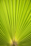 Palm tree leaf background. Nice background Stock Photo