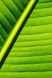 Palm tree leaf background Stock Photography