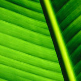 Palm tree leaf background Royalty Free Stock Photo