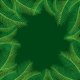 Palm leaf tree background design. Palm tree leaf background, greeting card design Stock Photography