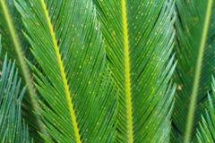 Palm tree leaf Stock Photo