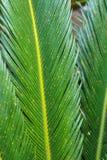 Palm tree leaf close up, Stock Photos
