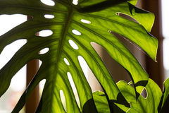 Palm tree leaf Royalty Free Stock Photography