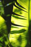 Palm tree leaf close-up Stock Images