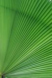 Palm tree leaf details background Stock Image