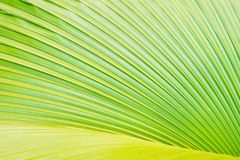 Palm tree leaf Stock Photography