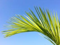 Palm tree leaf isolated on blue sky Stock Photos