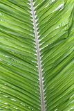 Palm Tree Leaf At Kew Gardens Stock Photos