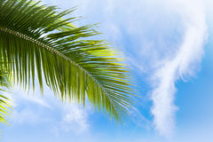 Palm tree leaf over blue cloudy sky Stock Images