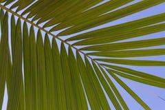Palm tree leaf - palm tree, blue sky background Royalty Free Stock Photos